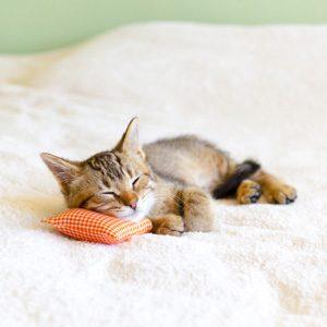 Cat Fact: Cats Don't Always Nap