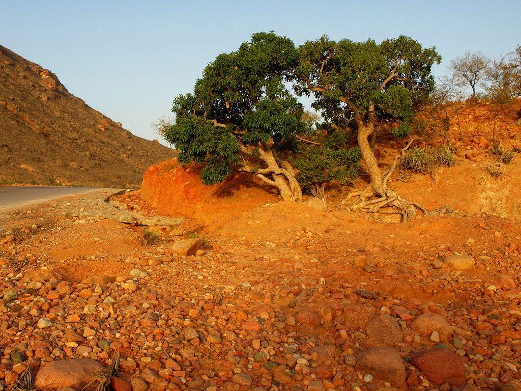 Natural Wonder of Yemen: Socotra Archipelago