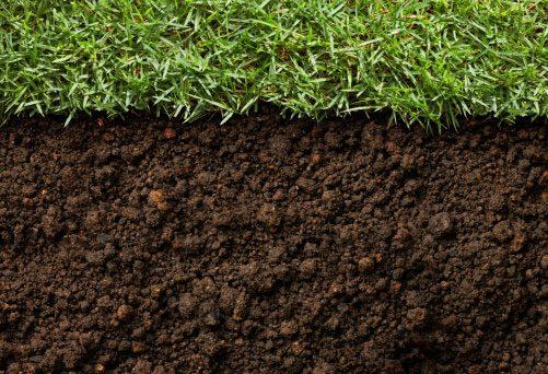 Test Soil