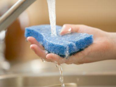 Banish Sponge Bacteria