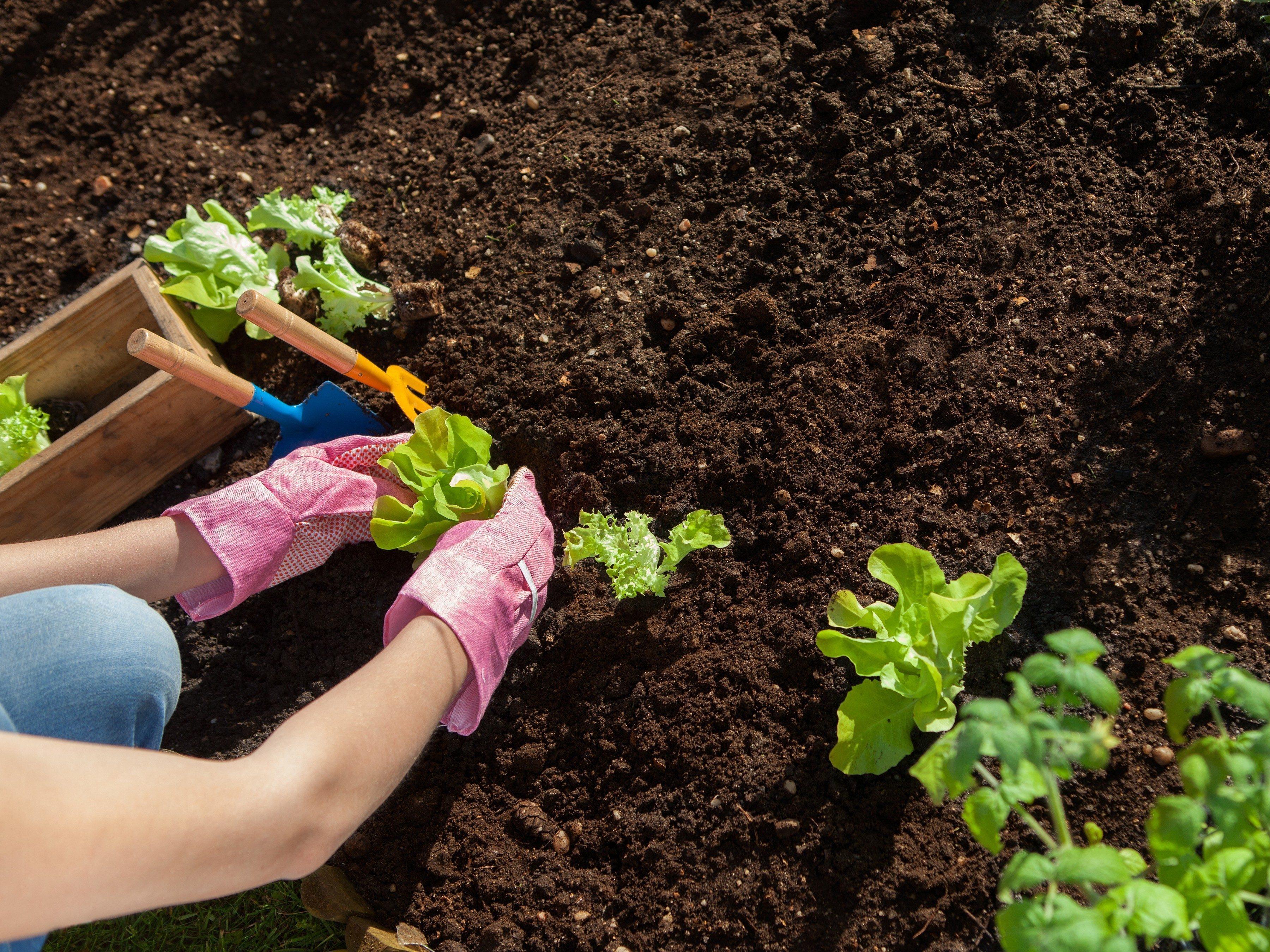 Be Selective With Garden Soil