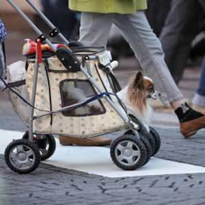 1. Pet Stroller