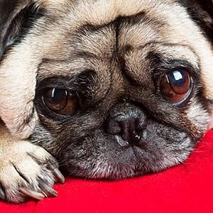 8. How To Tell if Your Dog is Submissive
