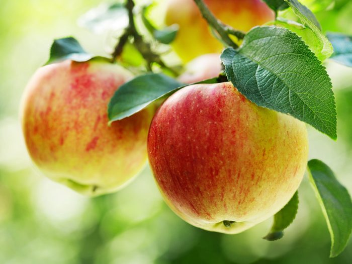 Superfoods for Your Heart: Apples