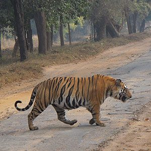 1. Bandhavgarh National Park, India