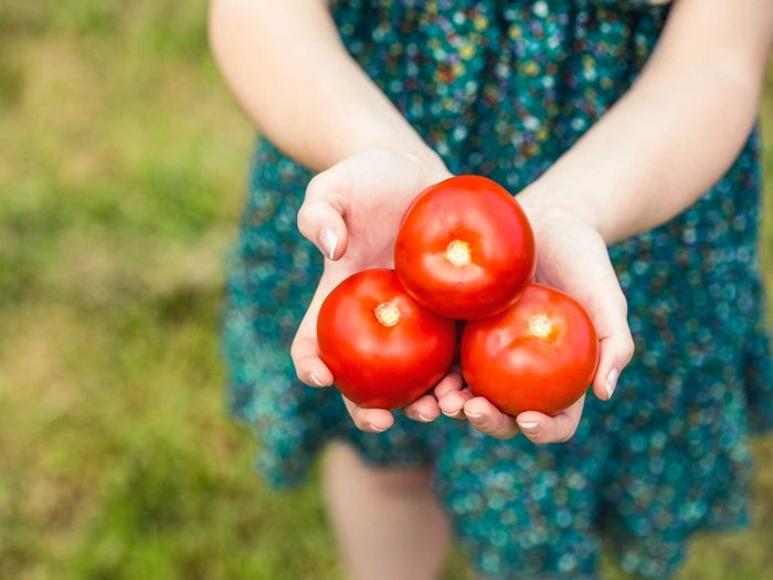 Capture the Flavour of Tomatoes at Their Peak
