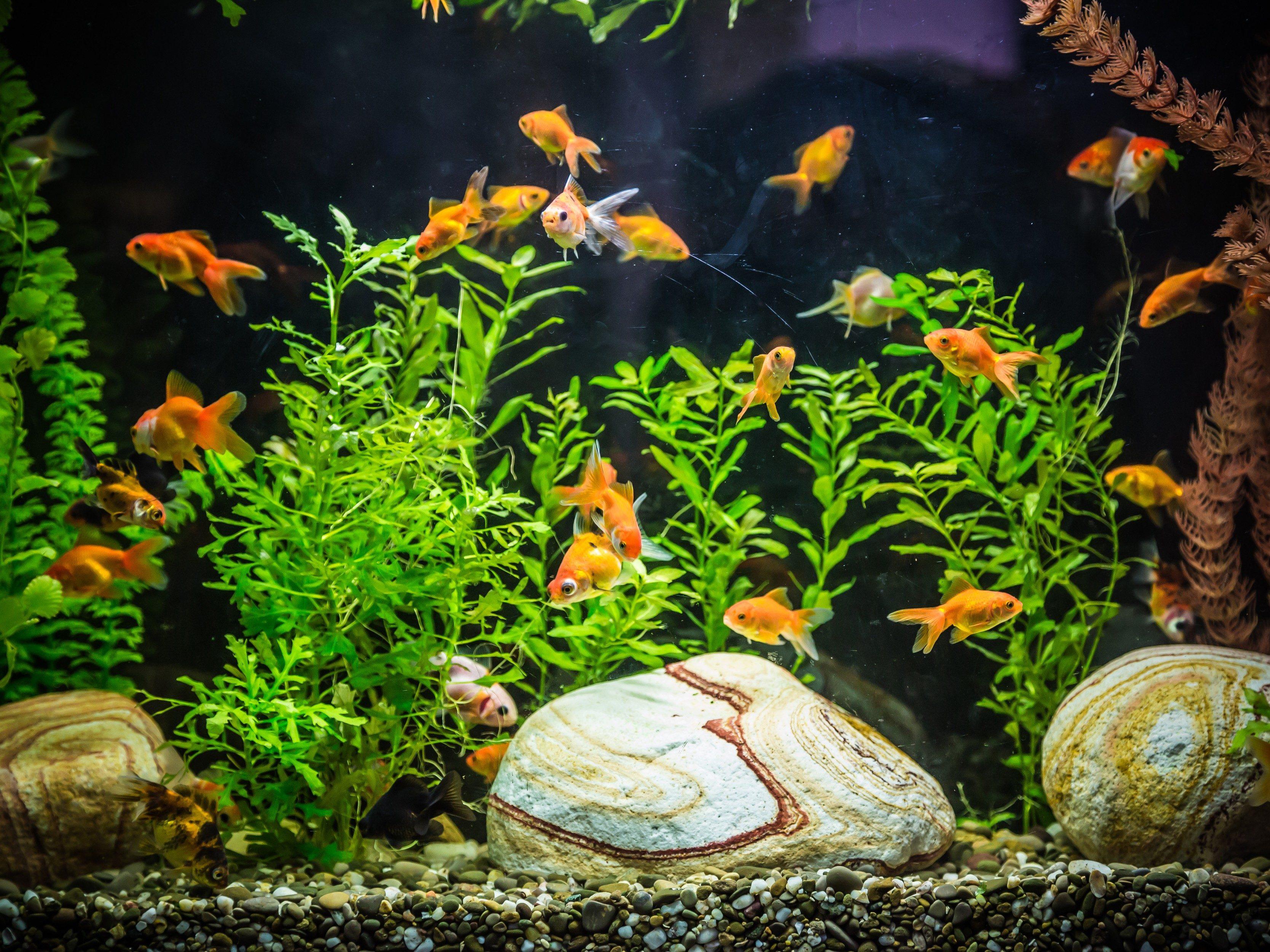 Use a Flowerpot as an Aquarium Fish Cave