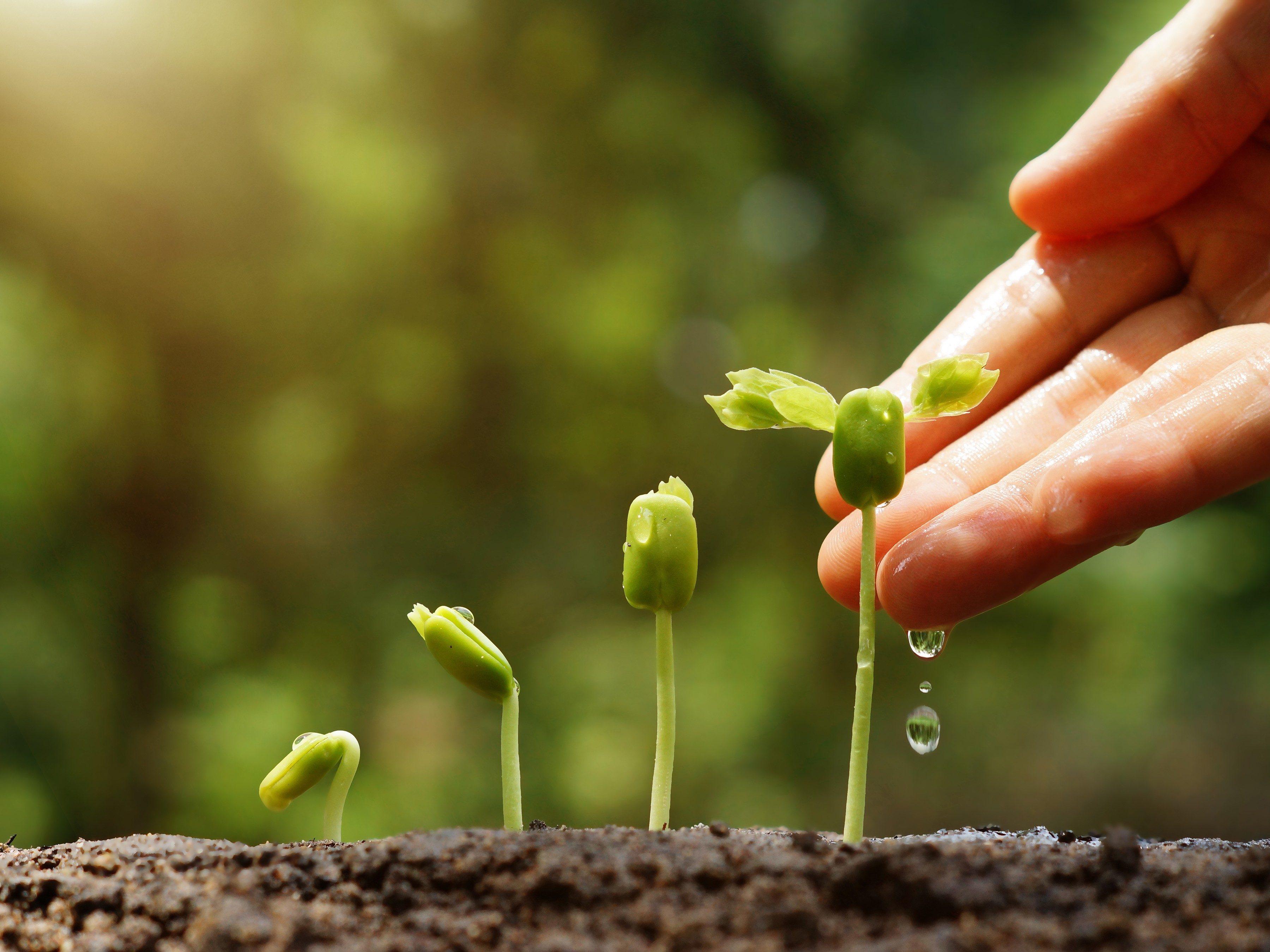 7. Fertilize Your Garden Less