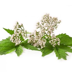Valerian - natural remedies for anxiety