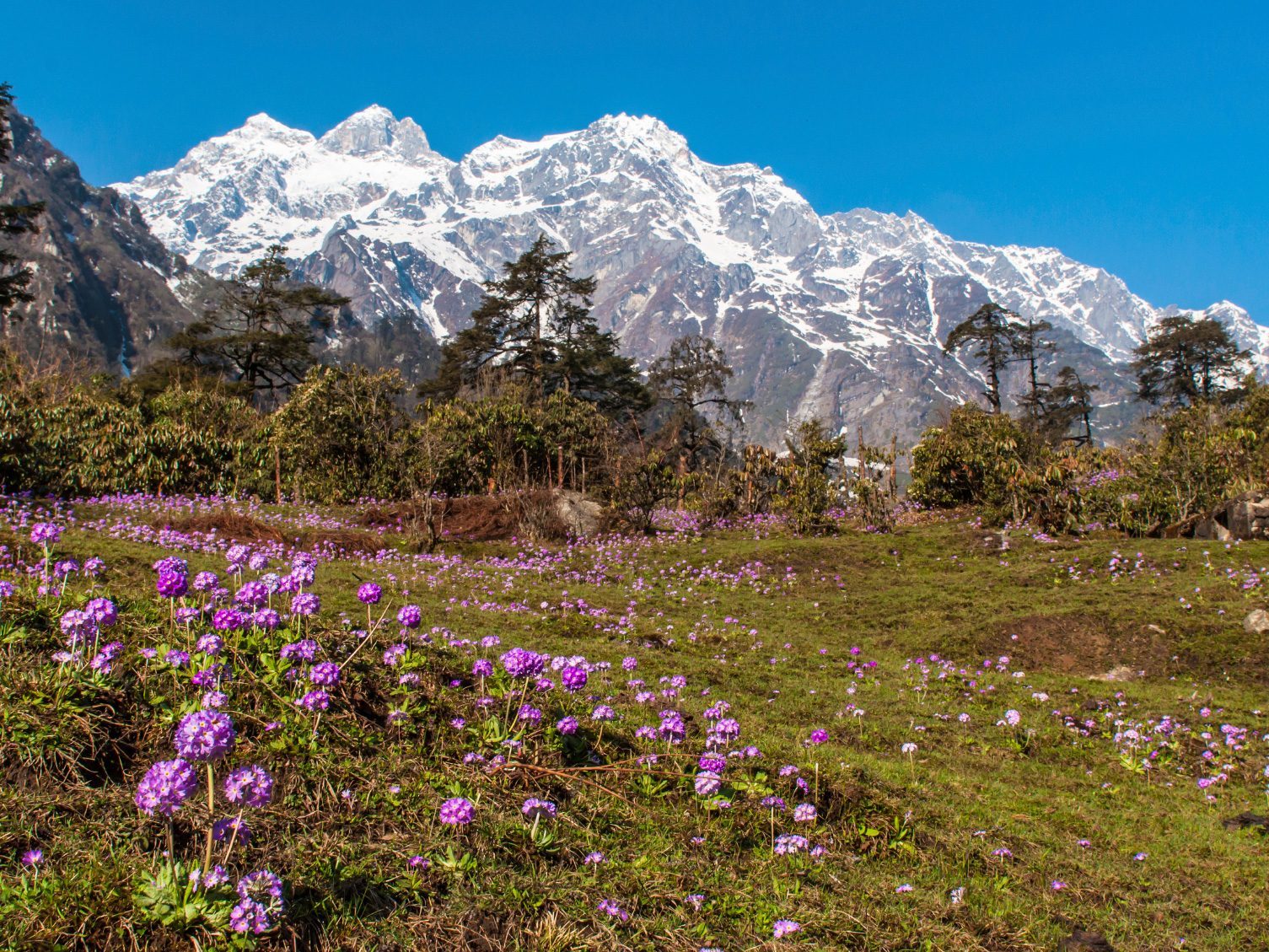 Natural Wonder of India: Valley of Flowers