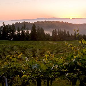 California wine attractions #1: The Hess Collection