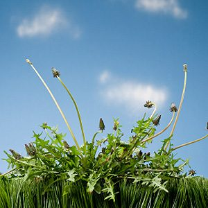 5. Kill Weeds in the Yard