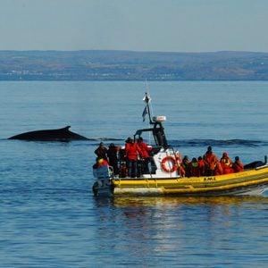 10. Go Whale Watching in Baie-Sainte-Catherine