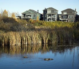 Tips for Designing a Wildlife Pond