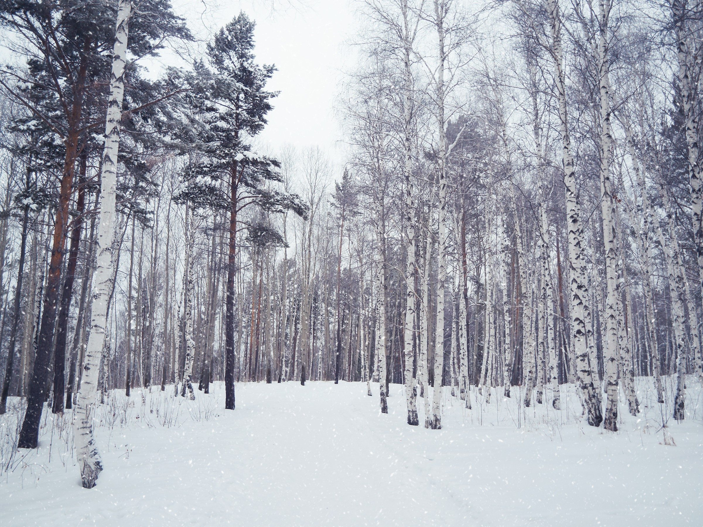 Snowiest Destinations: Siberia, Russia