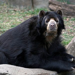 5. Lincoln Park Zoo
