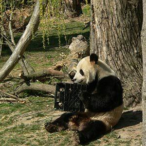 10. National Zoological Park