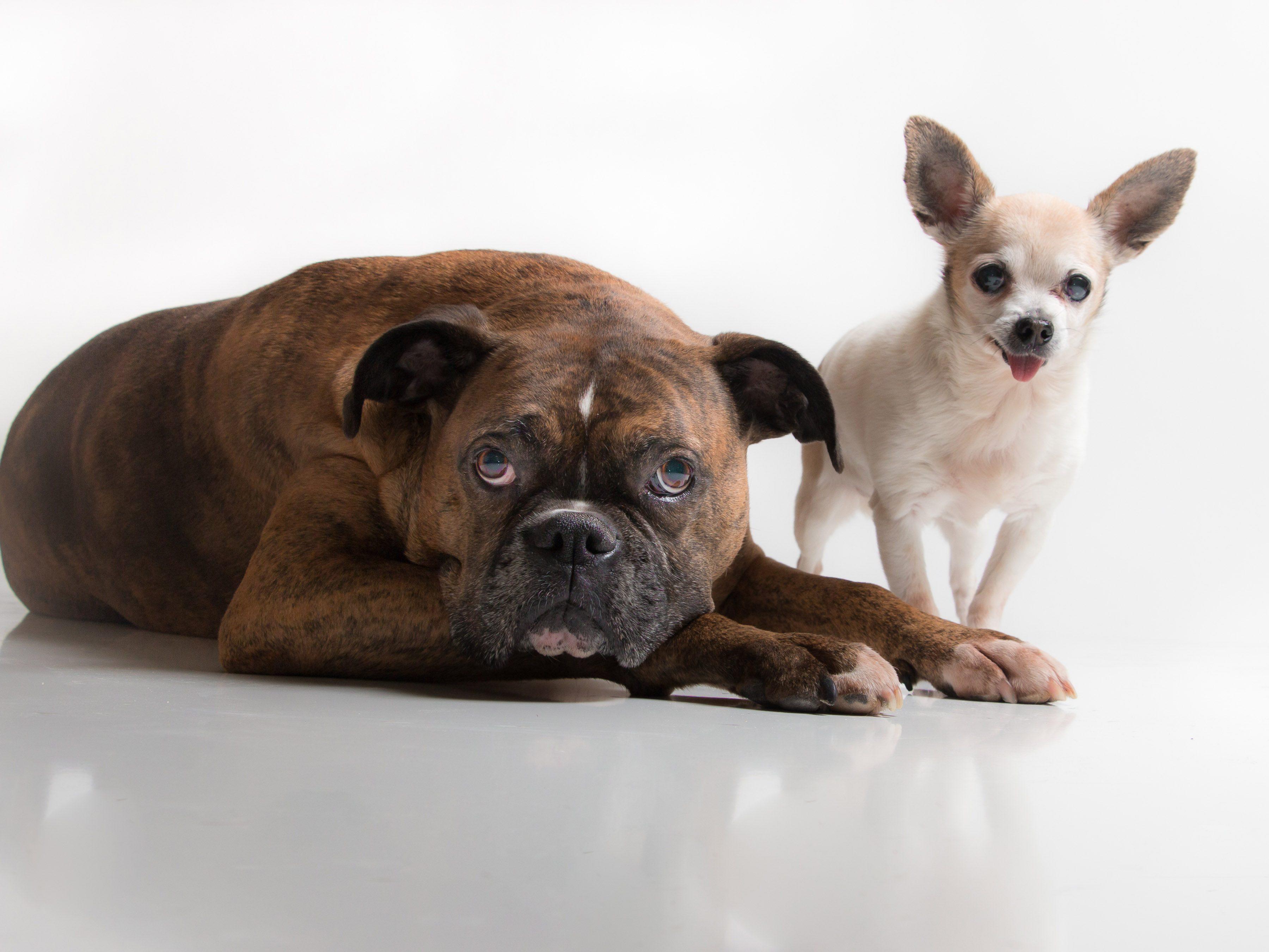 four-legged-friends-dogs-best-friends