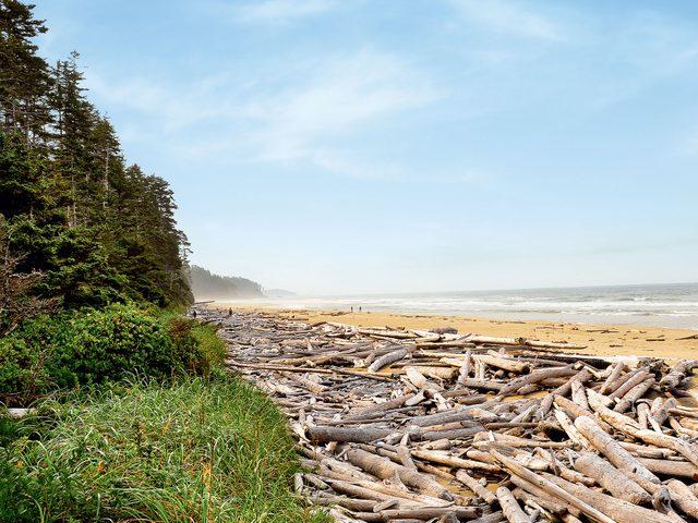 Driftwood on a beach on Calvert Island, British Columbia