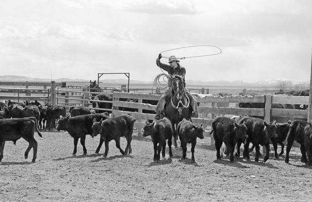 Cowboy at farm