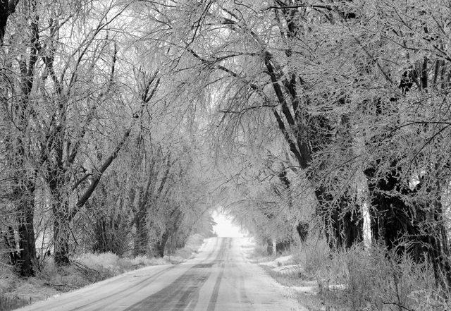 Icy Trees at Rice Lake, Ont.