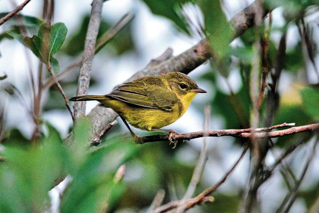 Bird watching in Nova Scotia
