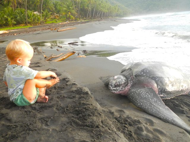 Child's encounter with a sea turtle on Dominica