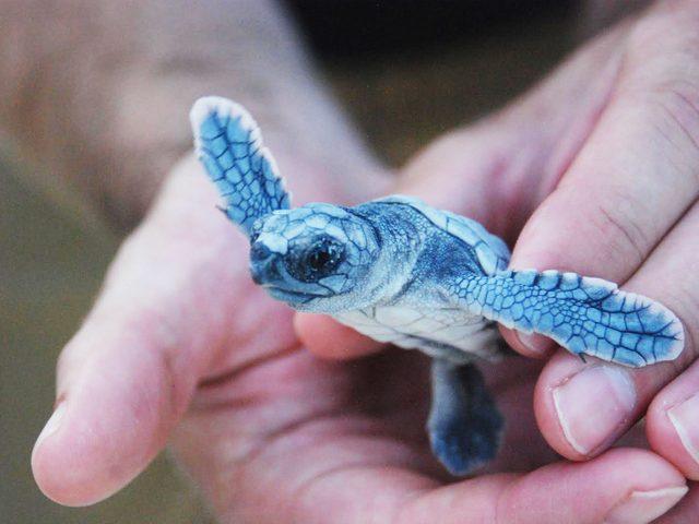 Baby sea turtle in Cancun
