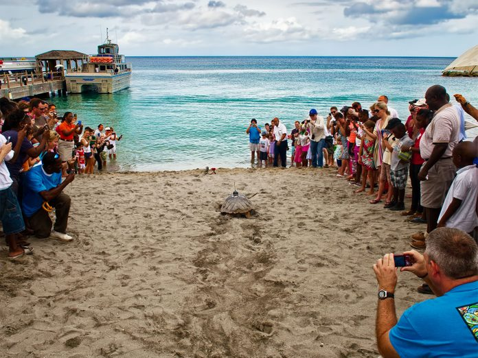 Sea turtle on the beach on Nevis