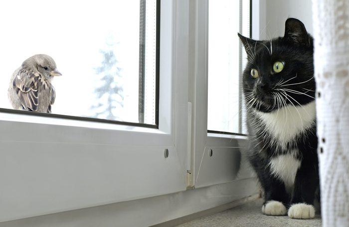 Cat bird watching on windowsill