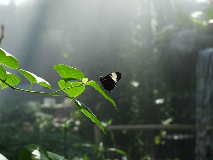 Cambridge Butterfly Conservatory, Waterloo Region
