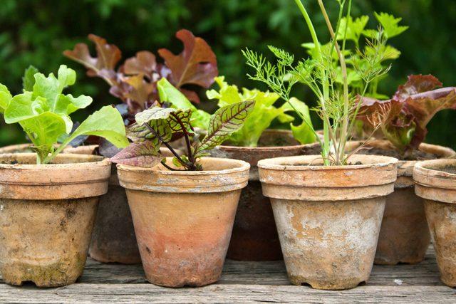 Damaged flower pots in garden
