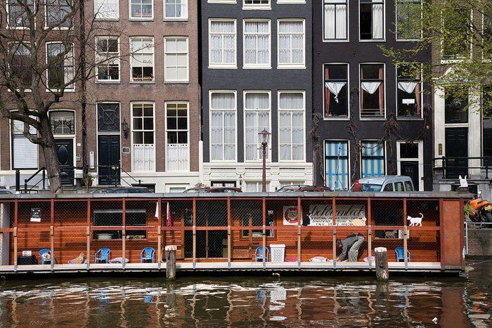 Cat Boat in Amsterdam, Netherlands