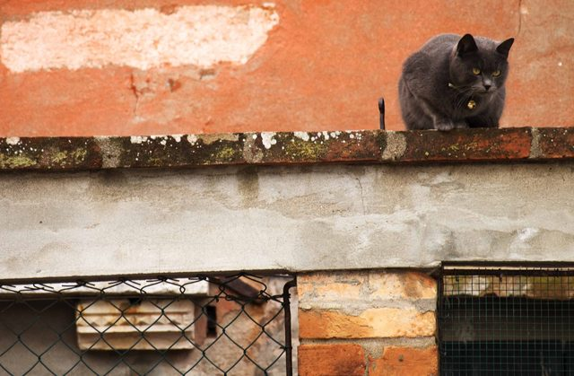 Largo Di Torre Argentina Cat Sanctuary is one of the world's best destinations for cat lovers
