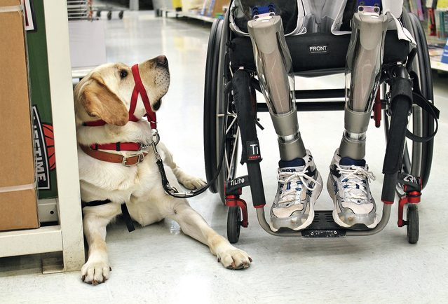 Vantage from Assistance Dogs Division