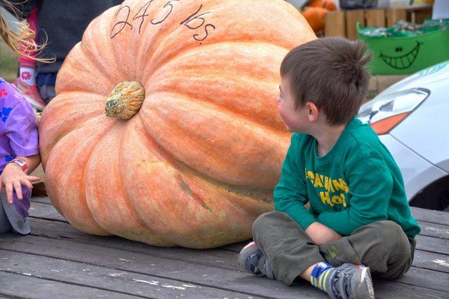 Little boy sitting next to giant pumpkin