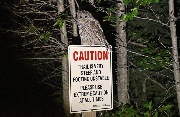 Owl sitting on caution sign at night