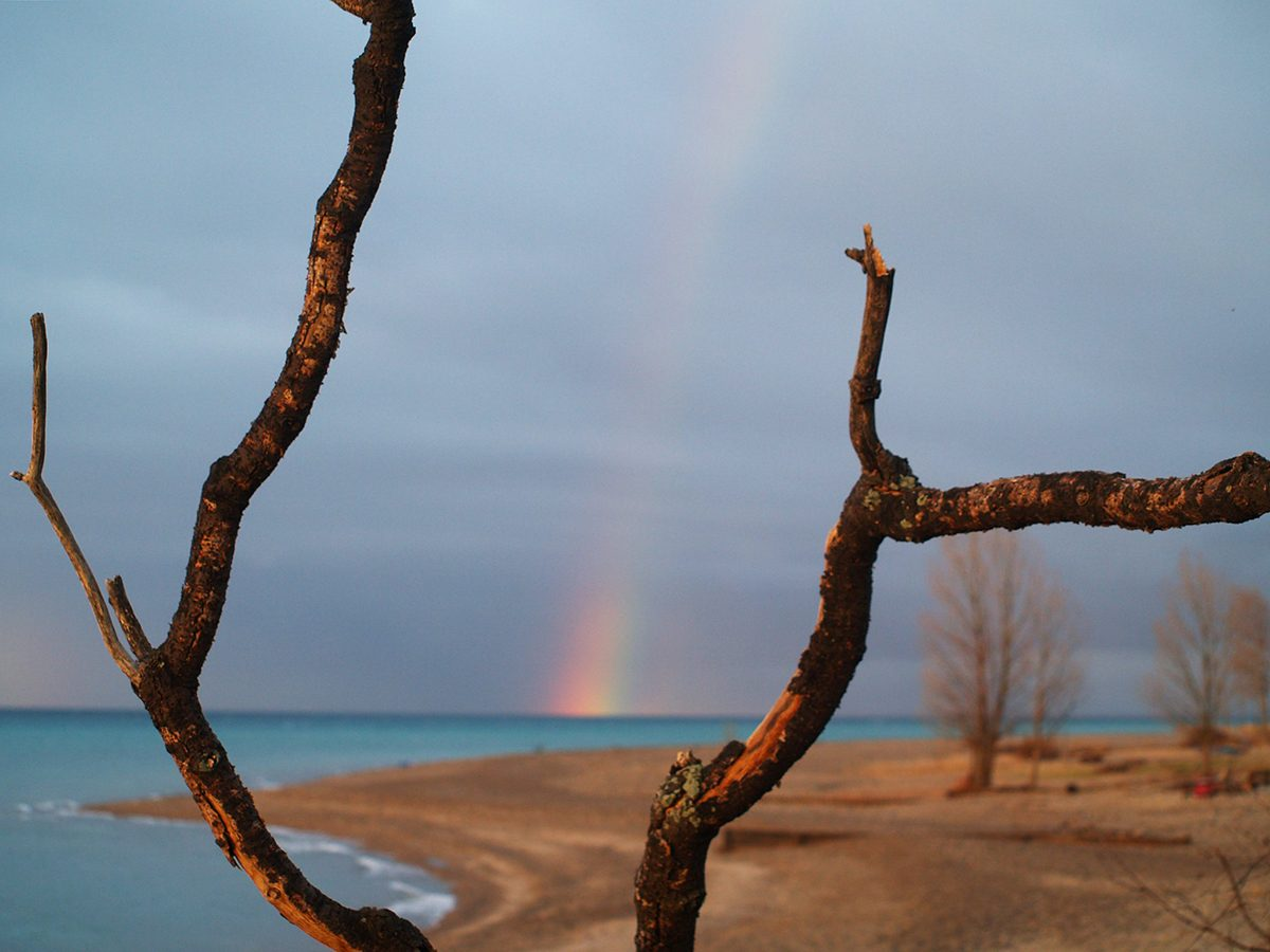 Rainbow photography - rainbow between two branches