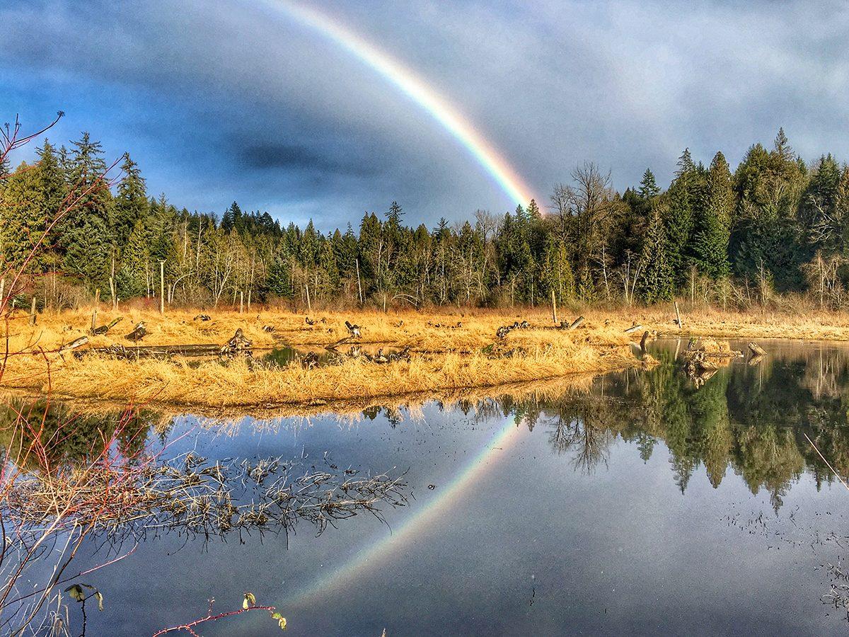 Rainbow photography - Silverdale Creek Wetlands rainbow