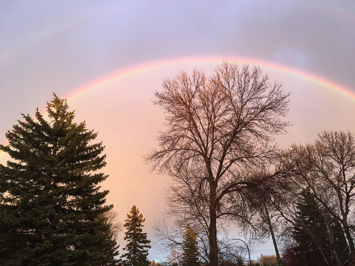 Rainbow photography - treetops in Winnipeg