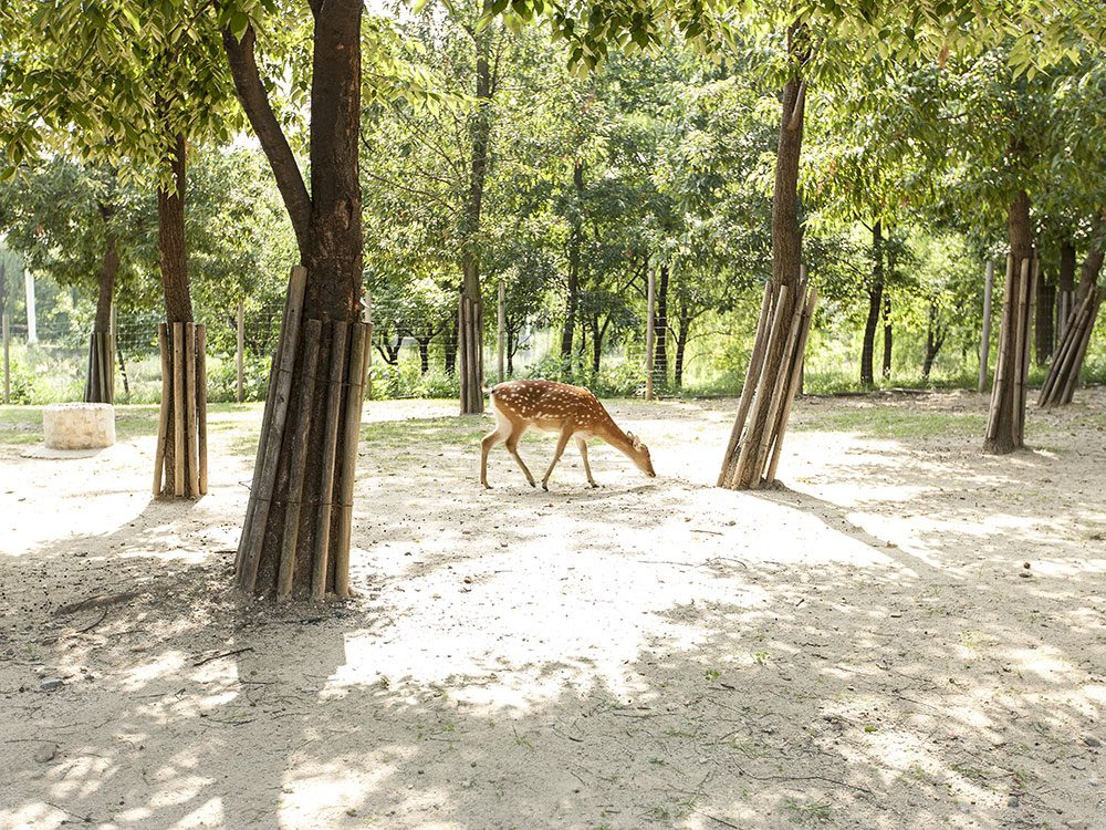 Deer in Seoul Forest Park