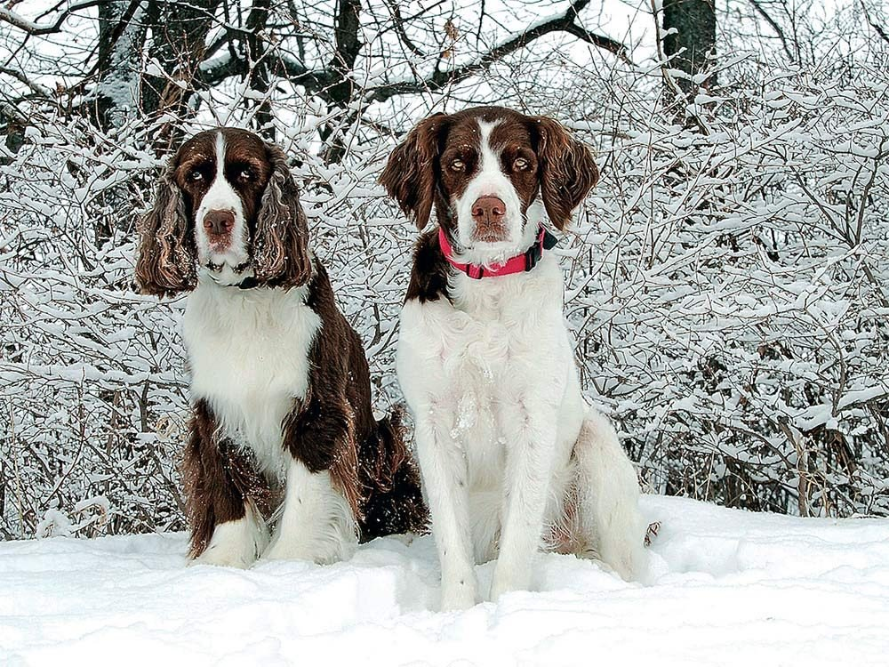 Two dogs outside in the snow