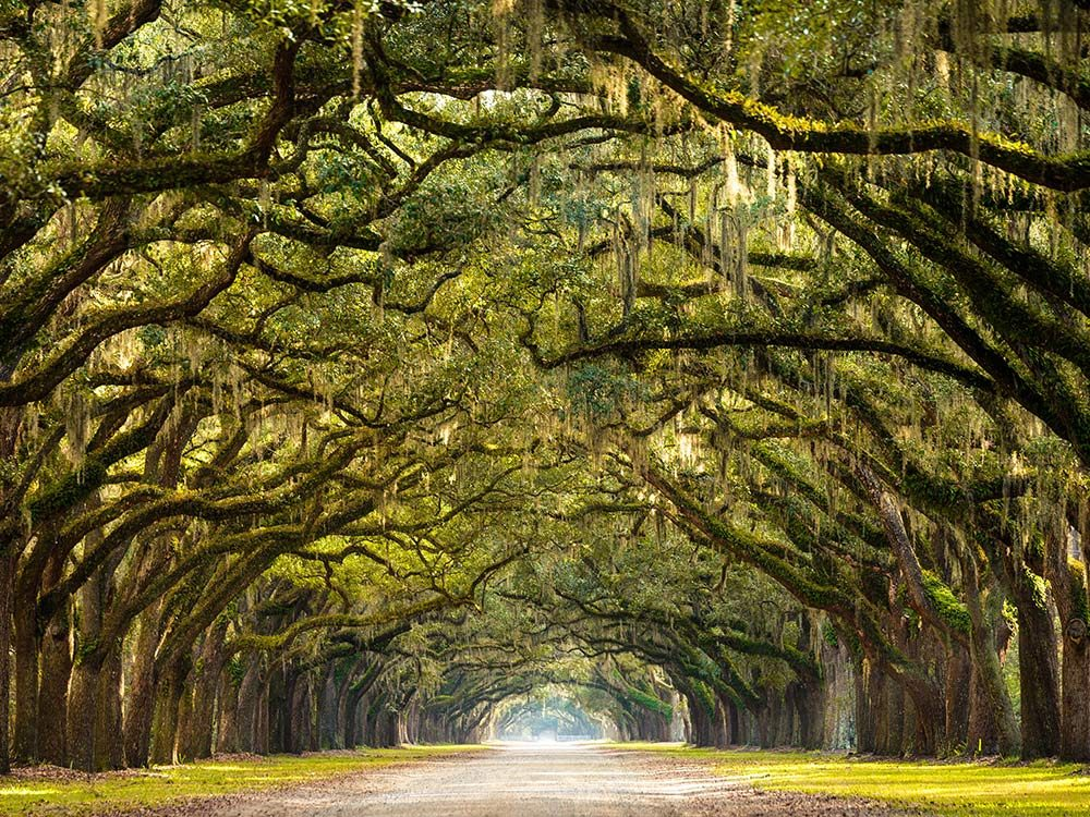 Trees in Savannah, Georgia