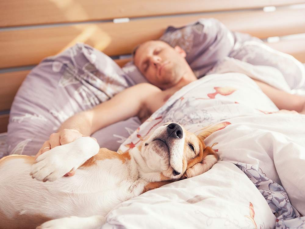 Dog and owner sleeping together in bed
