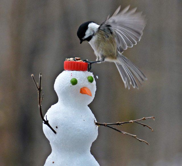 Bird flying onto bird feeder