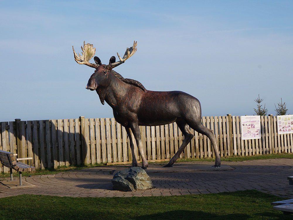 Cow Bay Moose