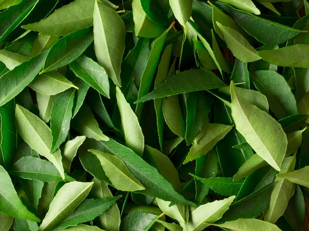 Fresh Indian curry leaves