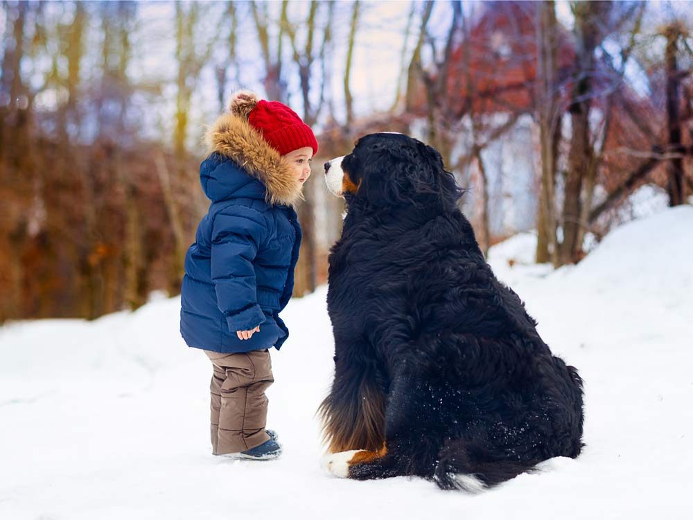 Little boy with large dog outside in winter