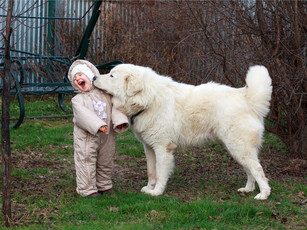 Large dogs are patient