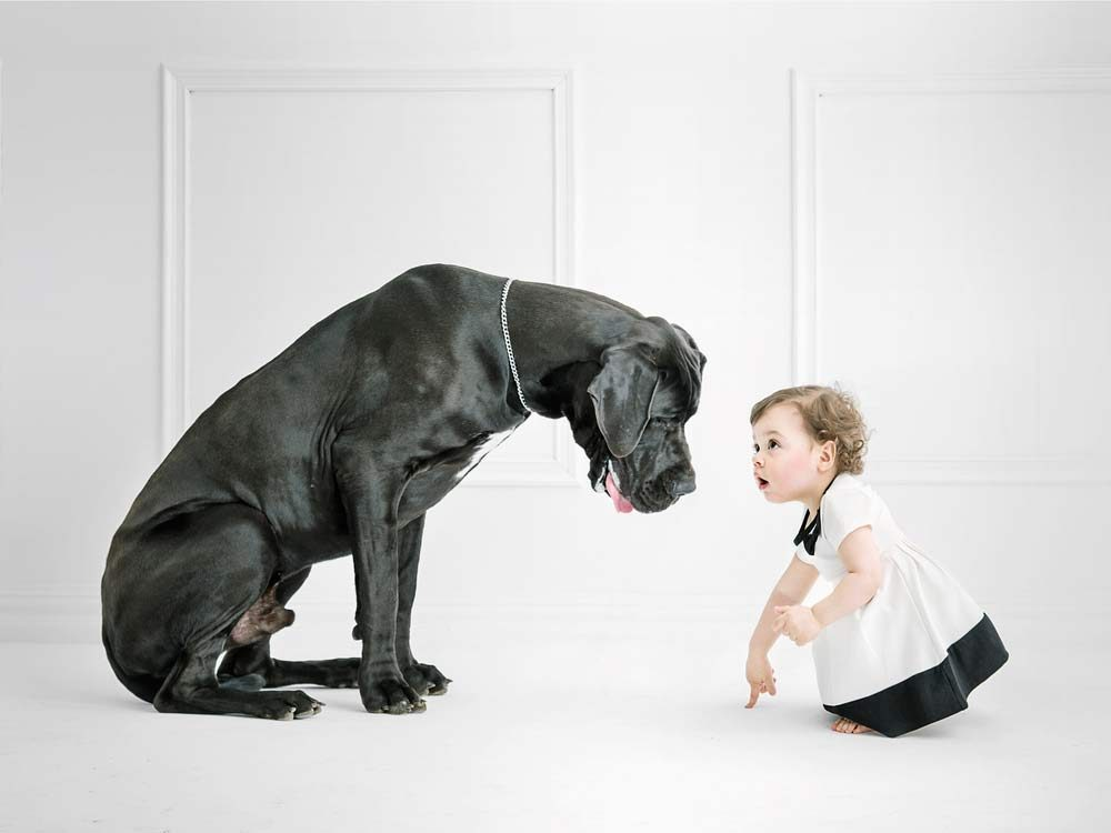Big dogs have surprising self-control